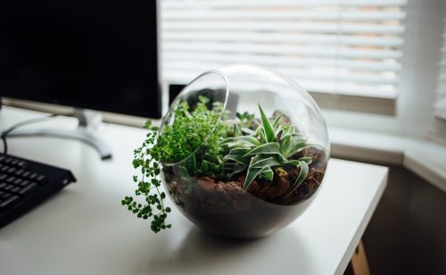 Ökologische Nachhaltigkeit lebt auch im Büro vom Mitmachen aller. Abbildung: Nielsen Ramon/Unsplash