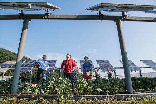Nachhaltigkeit wird zu einem entscheidenden Punkt unternehmerischen Handelns. Abbildung: Science in HD/Unsplash